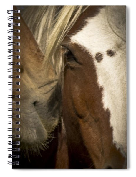 Wild Mustangs Of New Mexico 32 Spiral Notebook