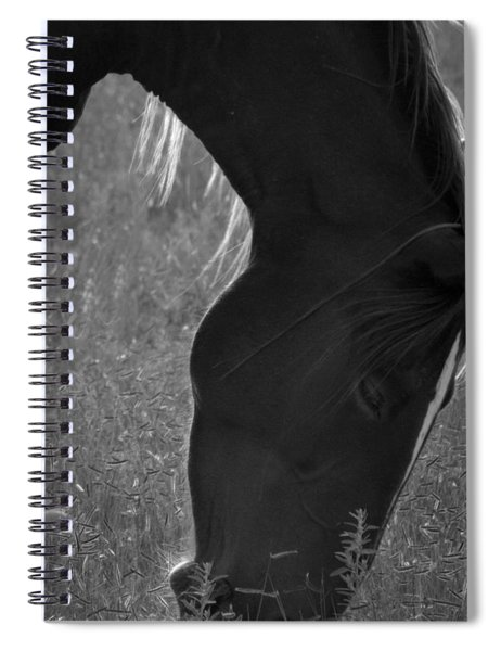 Wild Mustangs Of New Mexico 33 Spiral Notebook