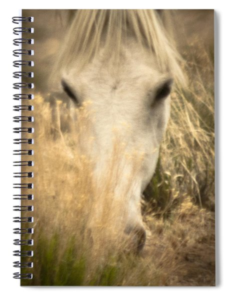 Wild Mustangs Of New Mexico 36 Spiral Notebook