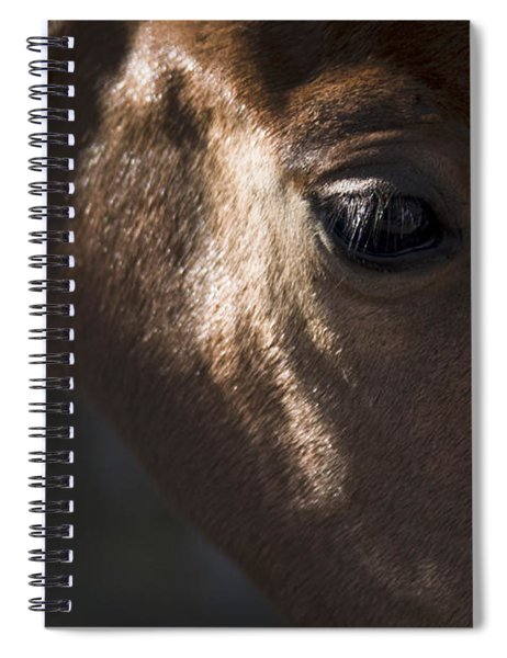 Wild Mustangs Of New Mexico 41  Spiral Notebook