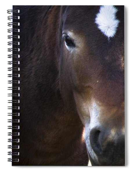 Wild Mustangs Of New Mexico 42 Spiral Notebook