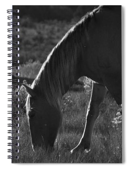 Wild Mustangs Of New Mexico 7 Spiral Notebook