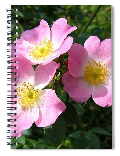 Wild Roses 1 Spiral Notebook