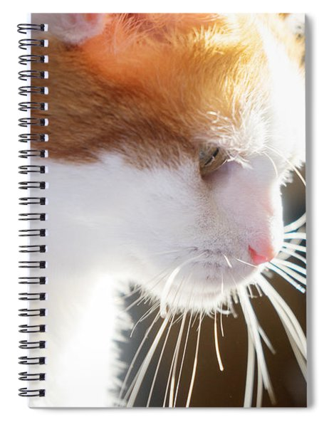 Wild Whiskers Spiral Notebook