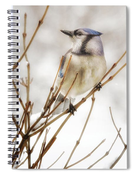 Winter Blue Jay Spiral Notebook