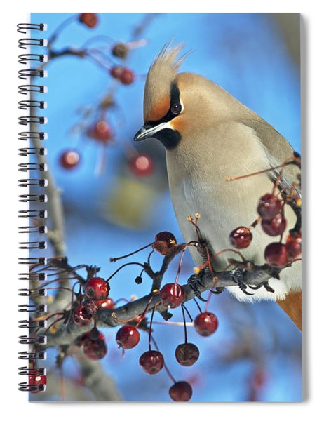 Winter Colors.. Spiral Notebook