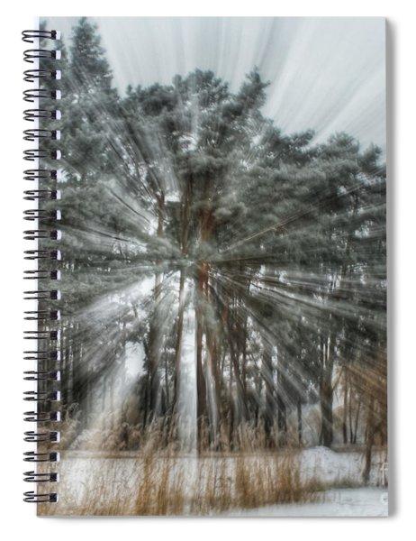 Winter Light In A Forest Spiral Notebook