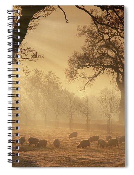 Winter's Gold Spiral Notebook