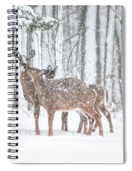 Winters Love Spiral Notebook