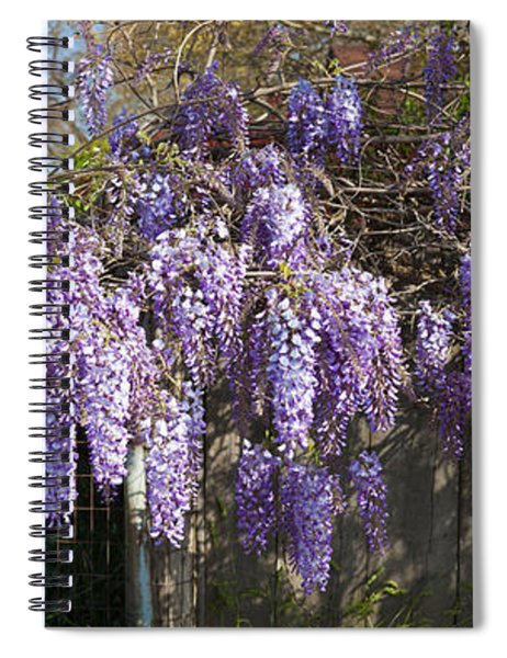 Wisteria Flowers In Bloom, Sonoma Spiral Notebook