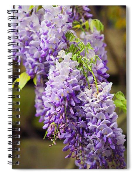 Wisteria Garden  Spiral Notebook