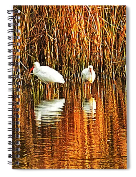 Wood Storks And 2 Ibis Spiral Notebook