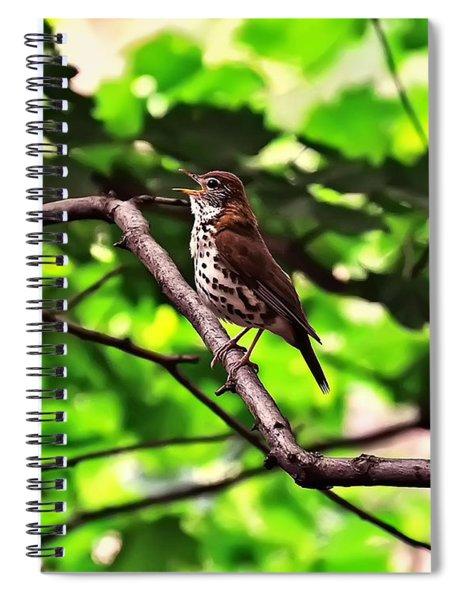 Wood Thrush Singing Spiral Notebook