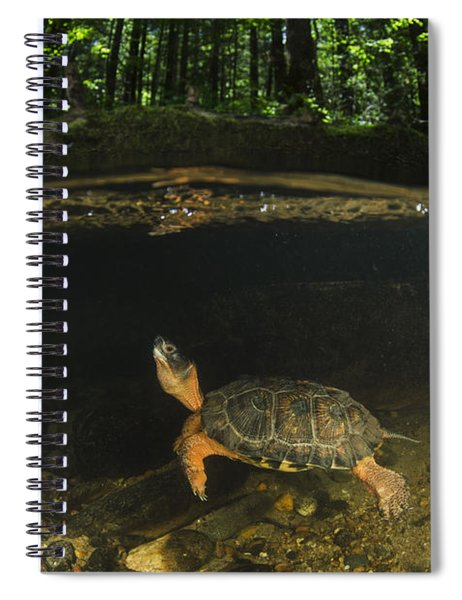 Wood Turtle Swimming North America Spiral Notebook