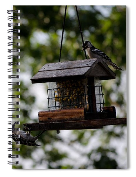 Woodpeckers At Dinner Spiral Notebook