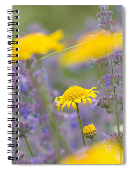 Yellow And Purple Flowers On A Green Summer Meadow Spiral Notebook