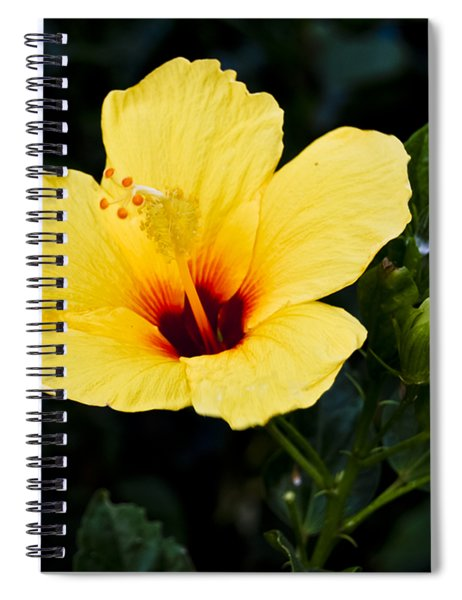 Yellow And Red Hibiscus Spiral Notebook