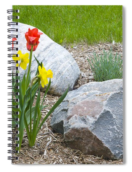Yellow And Red Tulips With Two Rocks Spiral Notebook
