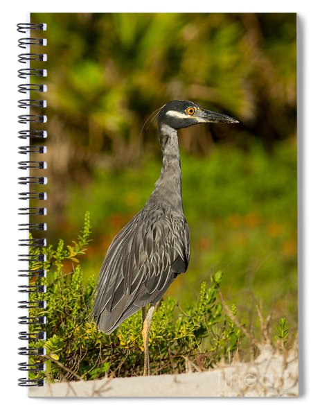 Yellow Crowned Night Heron Dune Watch Spiral Notebook