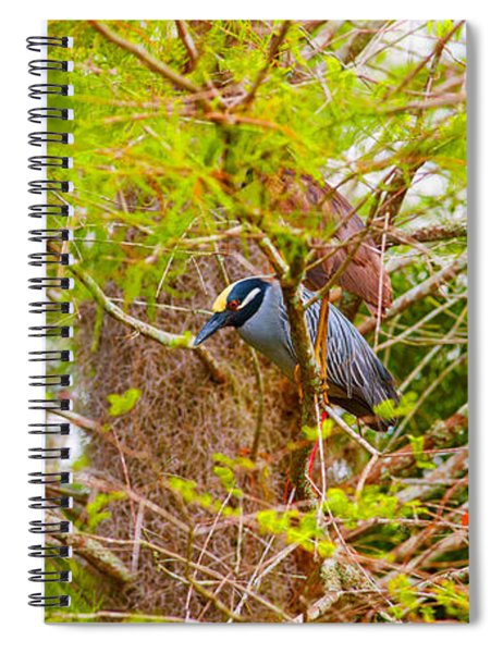 Yellow-crowned Night Heron Nyctanassa Spiral Notebook
