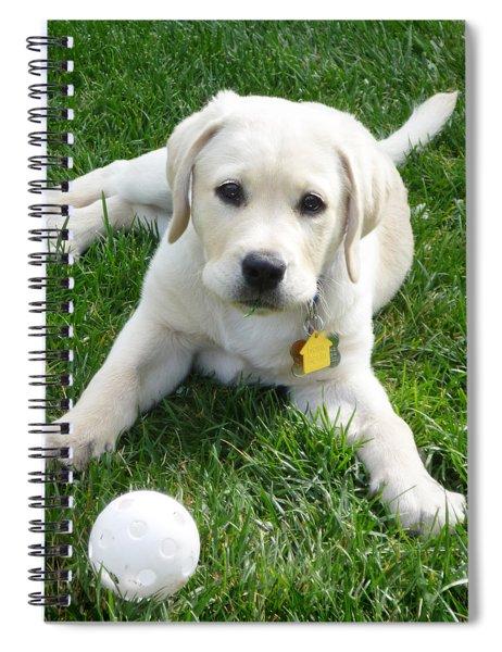 Yellow Lab Puppy Got A Ball Spiral Notebook