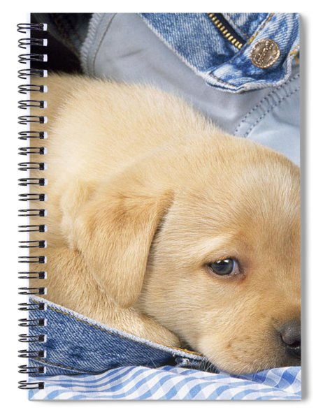 Yellow Labrador Puppy In Jeans Spiral Notebook