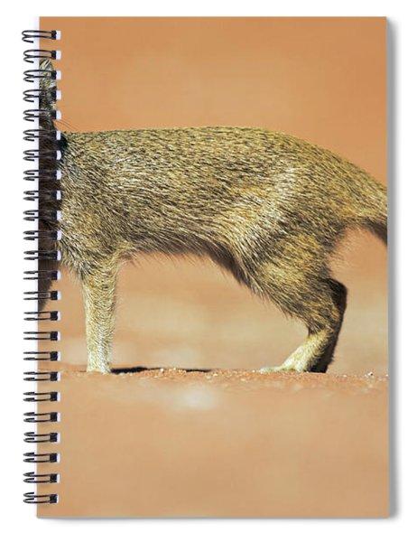 Yellow Mongoose In Kalahari Desert Spiral Notebook