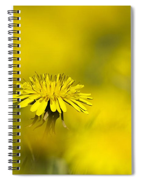 Yellow On Yellow Dandelion Spiral Notebook
