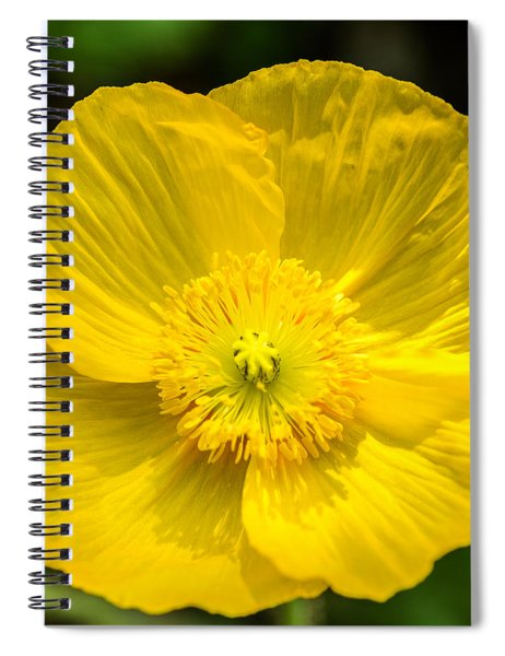 Yellow Poppy Spiral Notebook