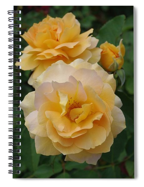 Yellow Roses Spiral Notebook