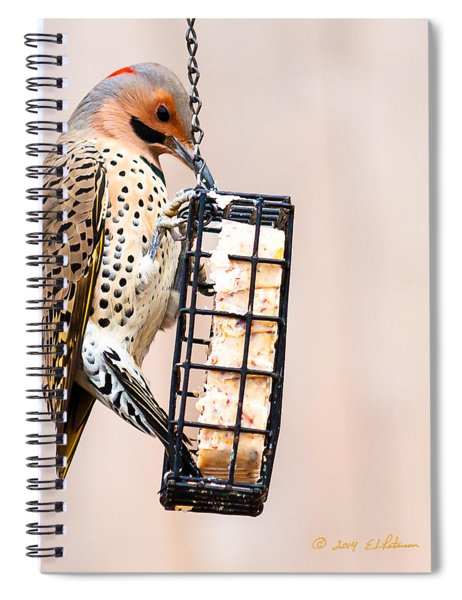 Spiral Notebook featuring the photograph Yellow-shafted Northern Flicker Lunch by Edward Peterson