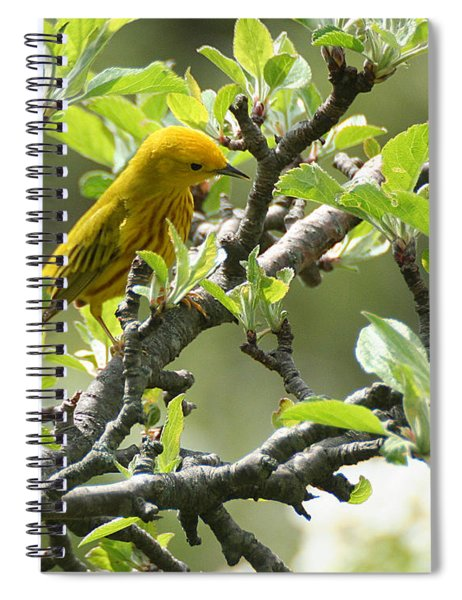 Yellow Warbler In Pear Tree Spiral Notebook