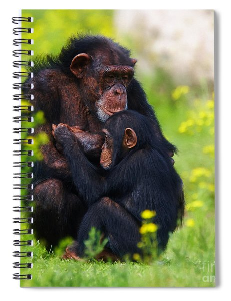 Young Chimpanzee With Adult - II Spiral Notebook