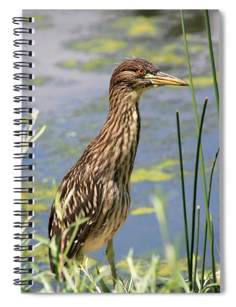 Young Heron Spiral Notebook