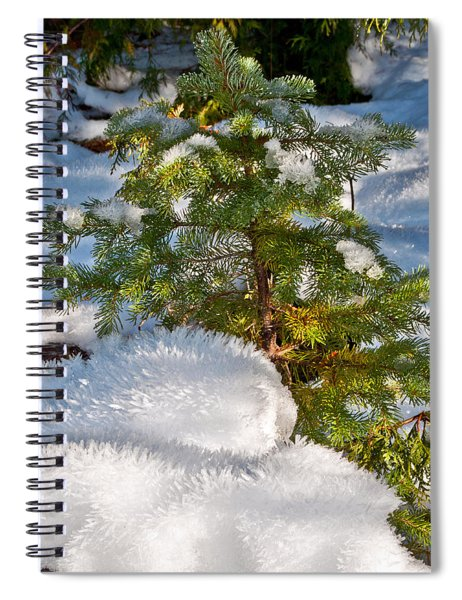 Young Winter Pine Spiral Notebook