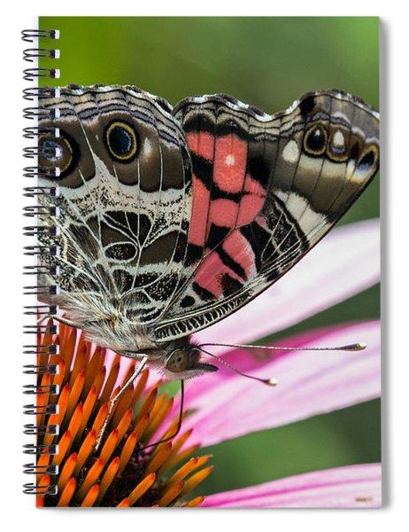 Butterfly Feeding Spiral Notebook
