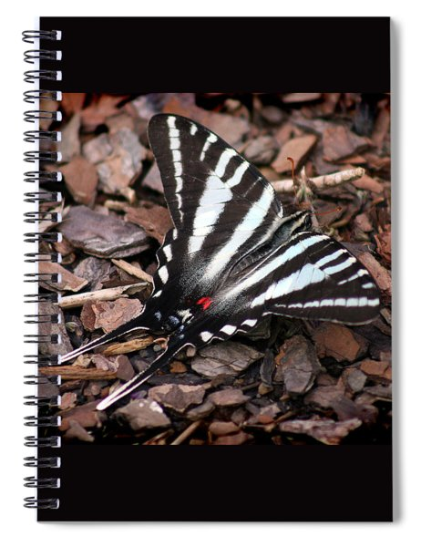 Zebra Swallowtail Butterfly Spiral Notebook