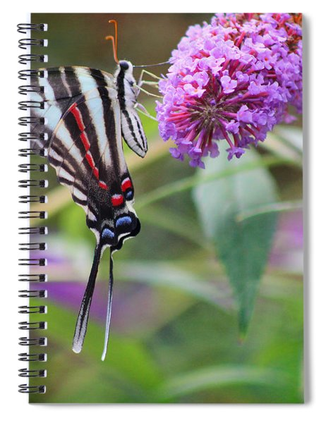 Zebra Swallowtail Butterfly On Butterfly Bush  Spiral Notebook