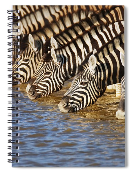 Zebras Drinking Spiral Notebook