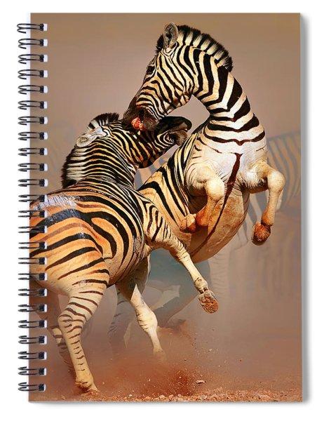 Zebras Fighting Spiral Notebook by Johan Swanepoel