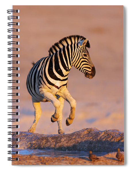 Zebras Jump From Waterhole Spiral Notebook