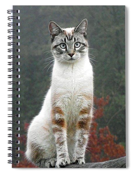 Zing The Cat Spiral Notebook