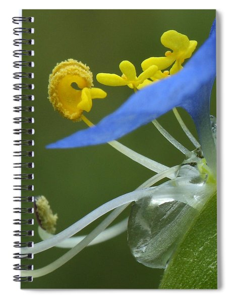 Close View Of Slender Dayflower Flower With Dew Spiral Notebook