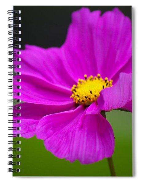 Cosmos Bipinnatus Spiral Notebook