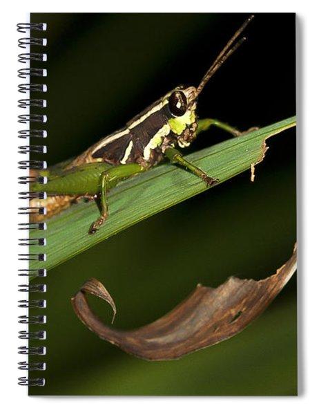Grasshopper Sitting On A Green Leaf Spiral Notebook