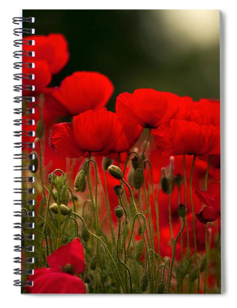Poppy Flowers 05 Spiral Notebook by Nailia Schwarz