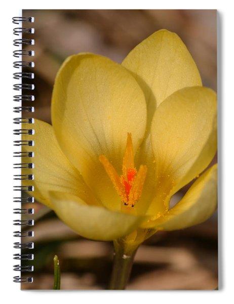 Yellow Crocus Spiral Notebook