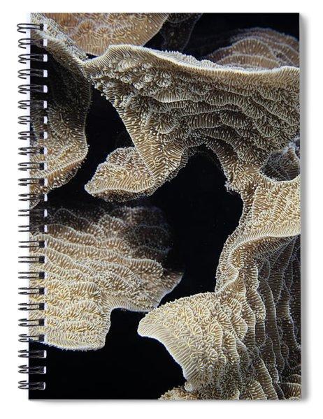 Coral Design Spiral Notebook