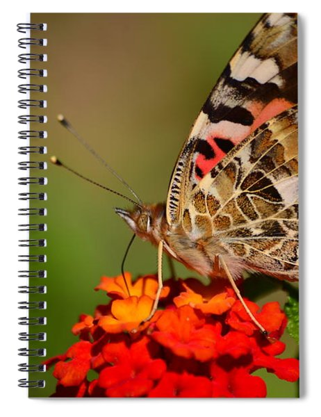 A Wing Of Beauty Spiral Notebook