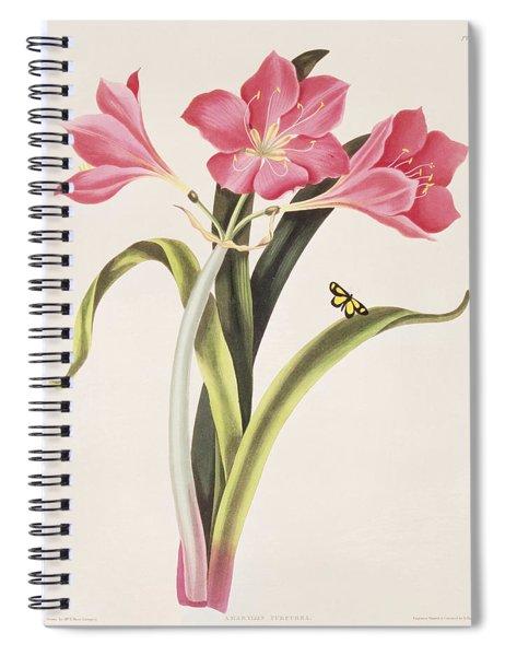 Amaryllis Purpurea Spiral Notebook